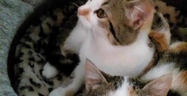 Mimi & Milly