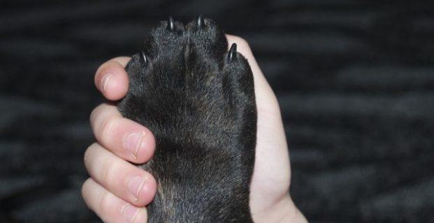 Hund und Kind begegnen sich – entspannt