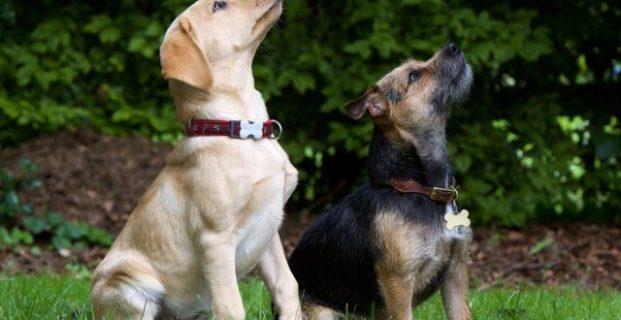 Grundgehorsam beim Hund: Sitz