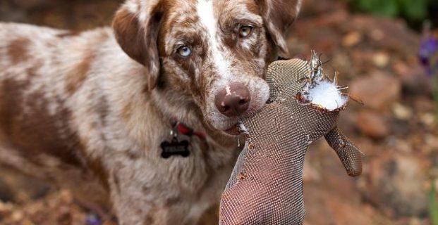 Jagdverhalten von Hunden