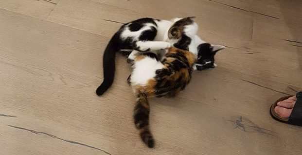 Max & Sina im Katzenparadies