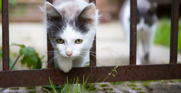 Was tun, wenn die Katze entlaufen ist?