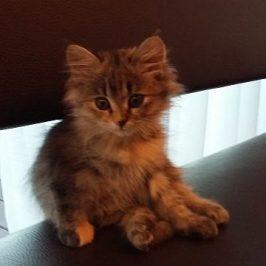 Klein Minka im neuen Zuhause