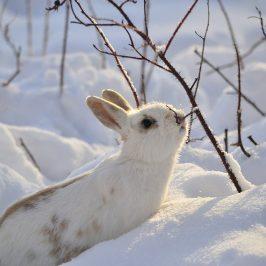 Winterfutter für Kaninchen