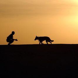 Was man bei der Wahl der Hundeschule beachten sollte