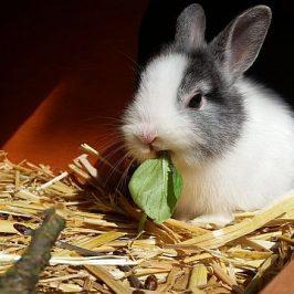 Kaninchengehege