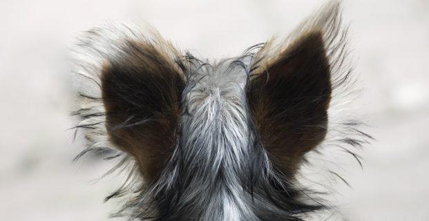 Haarsträubend