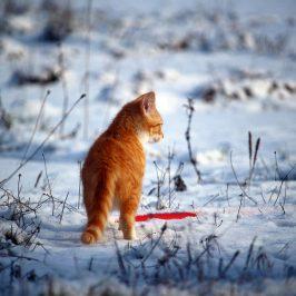 Brrrrrrr – Katzen und Schnee