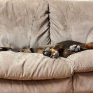 Hund auf dem Sofa?