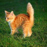 Der Schwanz einer Katze
