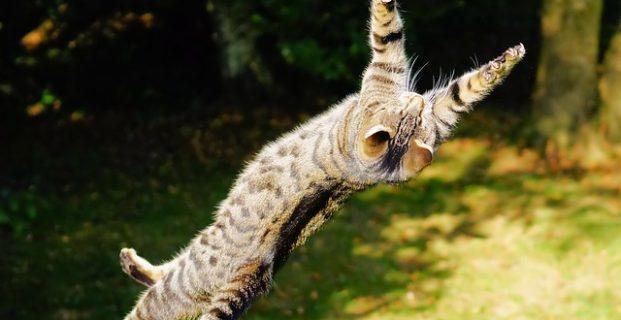 Das richtige Katzenspielzeug