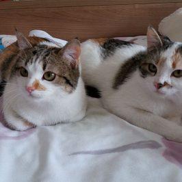 Mimmi & Milli