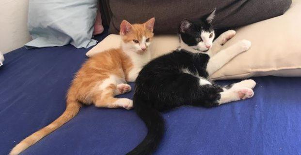 2 Kätzchen zu vergeben