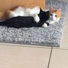 Maxi & Mimmi