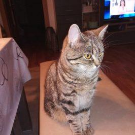 Katze Molly im Gadertal vermisst