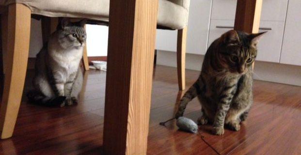 Tiggi & Kitti im neuen Zuhause