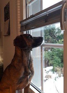 Warten auf das Eichhörnchen