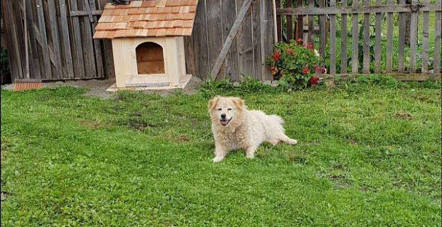 Hund Sammy in Reischach vermisst