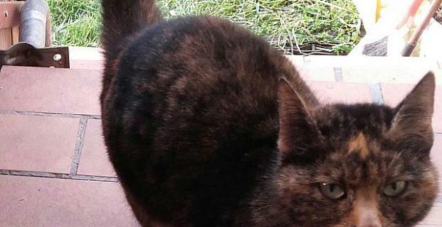 Katze in Vintl gefunden