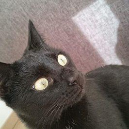 Katze Mia in Bruneck vermisst