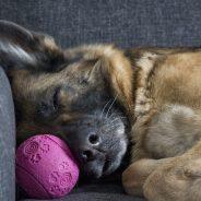 Entspannter Hund auf Knopfdruck