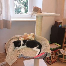 2 Kätzchen im Glück