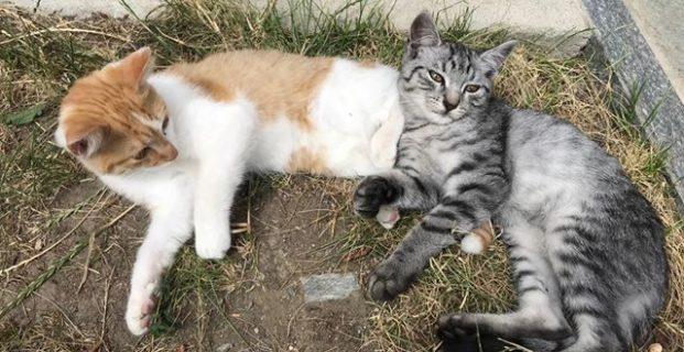 2 Kätzchen zu verschenken