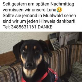 Hündin Luna in Mühlbach vermisst