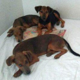 3 Hundewelpen