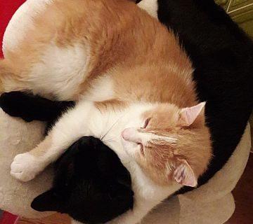 Blacky & Leo