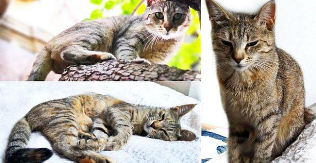 Katze Nebula in Sarns/Albeins vermisst
