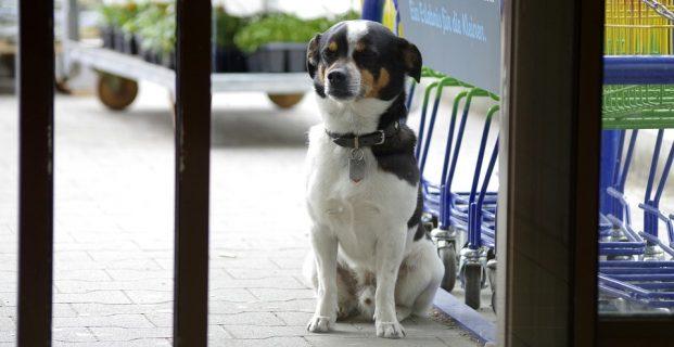 Wenn der Hund draussen warten muss ..