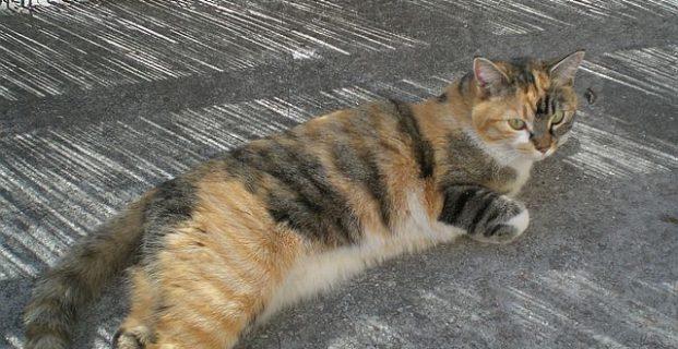 Katze Milla in Brixen vermisst