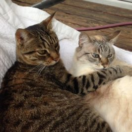 Tiggi & Kitti