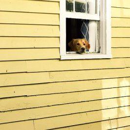 Warum der Hund ins Haus gehört