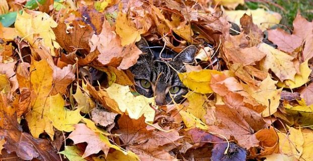 Katze verschwunden?
