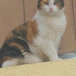 Katze Ketti in St. Lorenzen vermisst