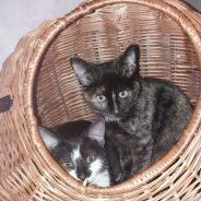 Mia & Fussl