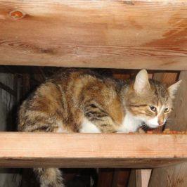 Katze in Gais zugelaufen