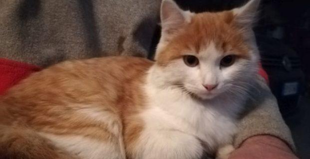 Katze Susi in Kiens vermisst