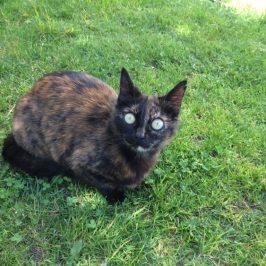 Katze Flecki in Niederrasen vermisst