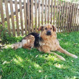 Hund Elias in Kiens vermisst