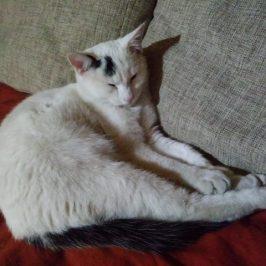Katze in St. Georgen/Bruneck vermisst