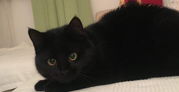 Kleine schwarze Katze