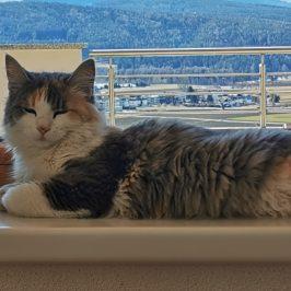 Katze in Dietenheim vermisst