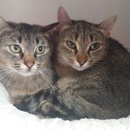 Maxi und Mia
