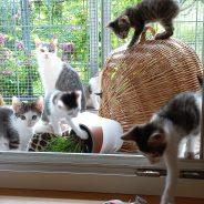Kleine Schätzchen