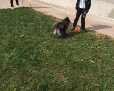 Puma beim Fußballtraining