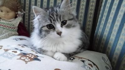 Kätzchen Nina