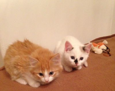 2 glückliche Kätzchen